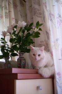 Ангорский котик становится ужасен в сумерках