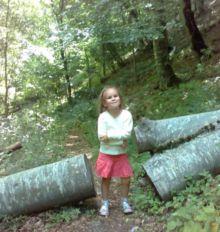 Дерево перегородило дорожку — в нём пропилили проход